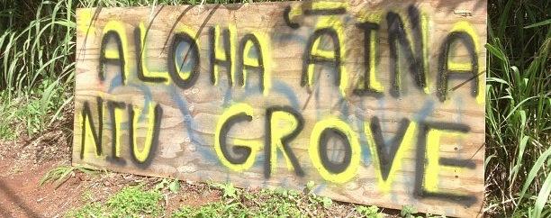Aloha_aina_niu_grove